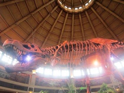 恐竜の骨格標本