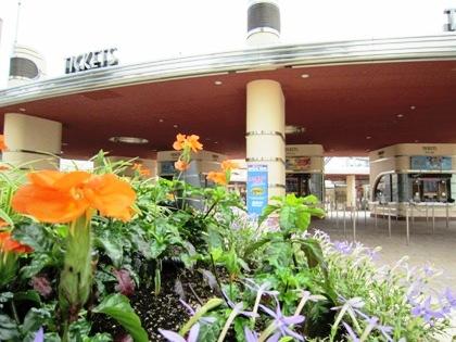 花の風景USJ