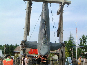 jaws-shark.jpg