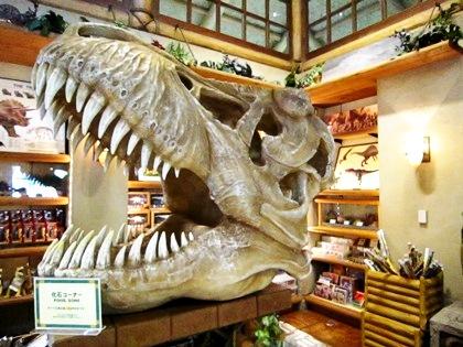 ジュラシック・アウトフィッターズ USJショッピング 化石コーナー jurassic-fossil-corner